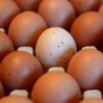 Les éleveurs ghanéens veulent voir les œufs produits dans le pays au menu dans les cantines scolaires