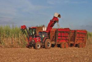Ph: Dr - La production du maïs a été touchée cette année avec une baisse évaluée à près de 3,6%