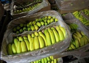 Ph: DR :En dépit de ces bons résultats, le pays continuait toujours à importer de la banane