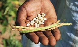 WASIS une plateforme sur les semences en Afrique de l'Ouest