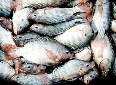 Poisson : Le Nigéria veut arrêter d'allouer des devises à l'importation de poissons