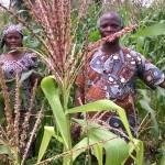 Enquête / Foncier et sécurité alimentaire dans la commune de Sèmè-kpodji / L'Arrondissement de Tohouè dans la Commune de Sèmè-Kpodji : La réalité des femmes dans les activités agricoles (2ère partie)