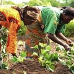 L'initiative concernera toutes les chaînes de valeur agricoles à potentiel commercial...