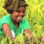 Ph: DR-: L'agriculture, une voie d'avenir pour la jeunesse.