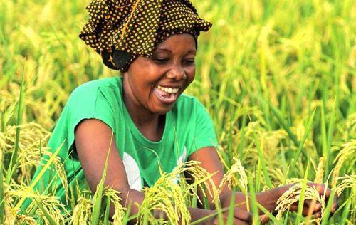 Banque mondiale / L'avenir des jeunes : les TIC, mais aussi l'agriculture