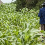 Ph:DR-: Un Forum pour favoriser l'adoption soutenue d'une agriculture intelligente face au climat dans le contexte africain.