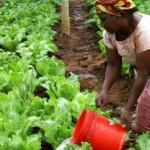 Aide au Développement : Le FADA accordera un financement de 3,4 millions $ à 17 PME agricoles africaines