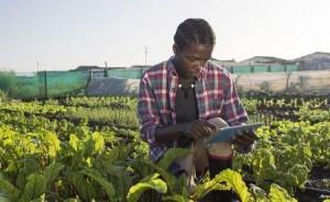 Ph: DR- Des bourses de l'Union africaine pour la recherche agricole au profit de la jeunesse