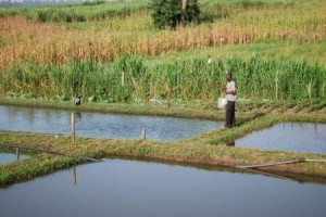 Ph: Selon la FAO, la consommation mondiale de poissons devrait progresser de 1,2% par an sur la prochaine décennie.