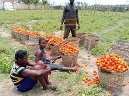 Fermeture des frontières nigérianes: Le ministre de l'agriculture rencontre les maraichers à Grand-Popo
