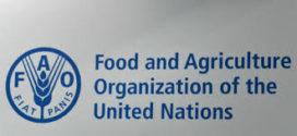 La FAO et l'ONU Environnement renforcer leur partenariat pour les systèmes alimentaires durables