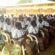 Campagne de sensibilisation sur le Corridor Abidjan-Lagos : Wildaf/AO dit Stop aux violences faites aux femmes commerçantes aux frontières.