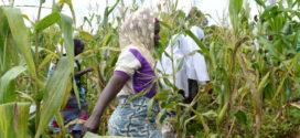 Bénin / Agriculture : La Banque africaine de développement accompagne la productivité et l'accroissement des filières agricoles porteuses