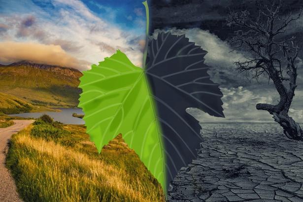 COP26 sur le climat : la CEDEAO appelle les organisateurs à œuvrer pour une réunion inclusive et participative