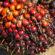 Production d'oléagineux au Bénin : Le gouvernement pour sauver l'huilerie CODA-BENIN S.A et les emplois